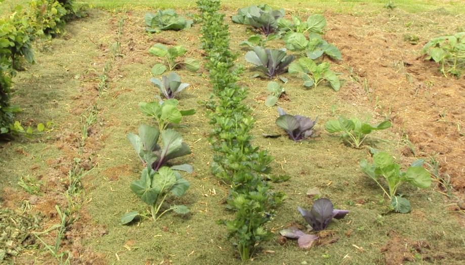 Jardinage au naturel paris terres d 39 envol - Desherbant selectif gazon efficace ...